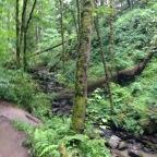 Running in Portland, OR